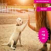 Dog Behaviour & Training Course £14 @ Wowcher